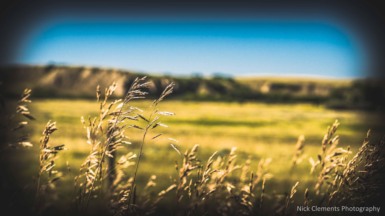 Cypress Hills Saskatchewan-1244