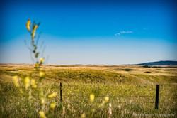 Cypress Hills Saskatchewan-86