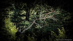 Cypress Hills Saskatchewan-166