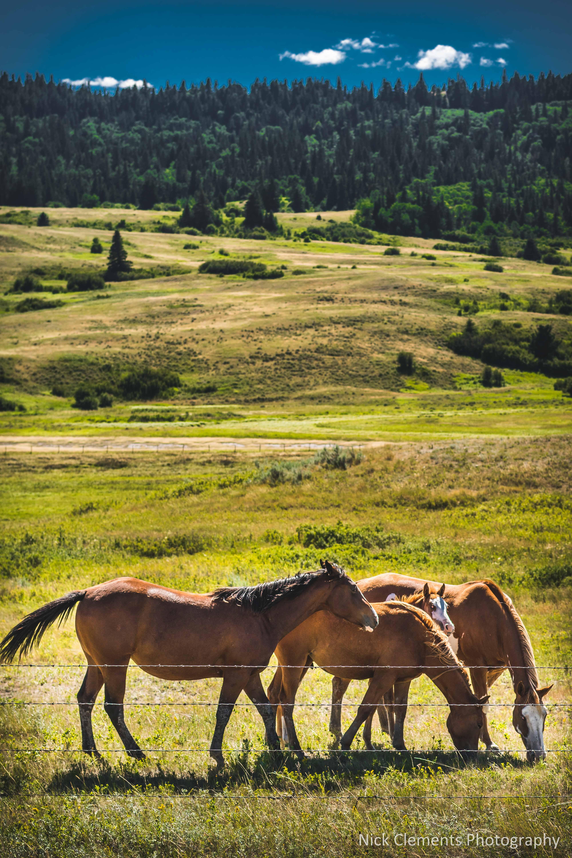 Cypress Hills Saskatchewan-1148