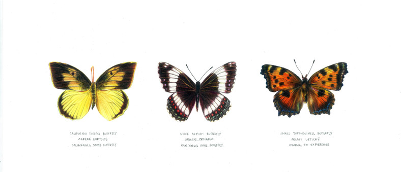 Butterfliescolourcorrected.jpg