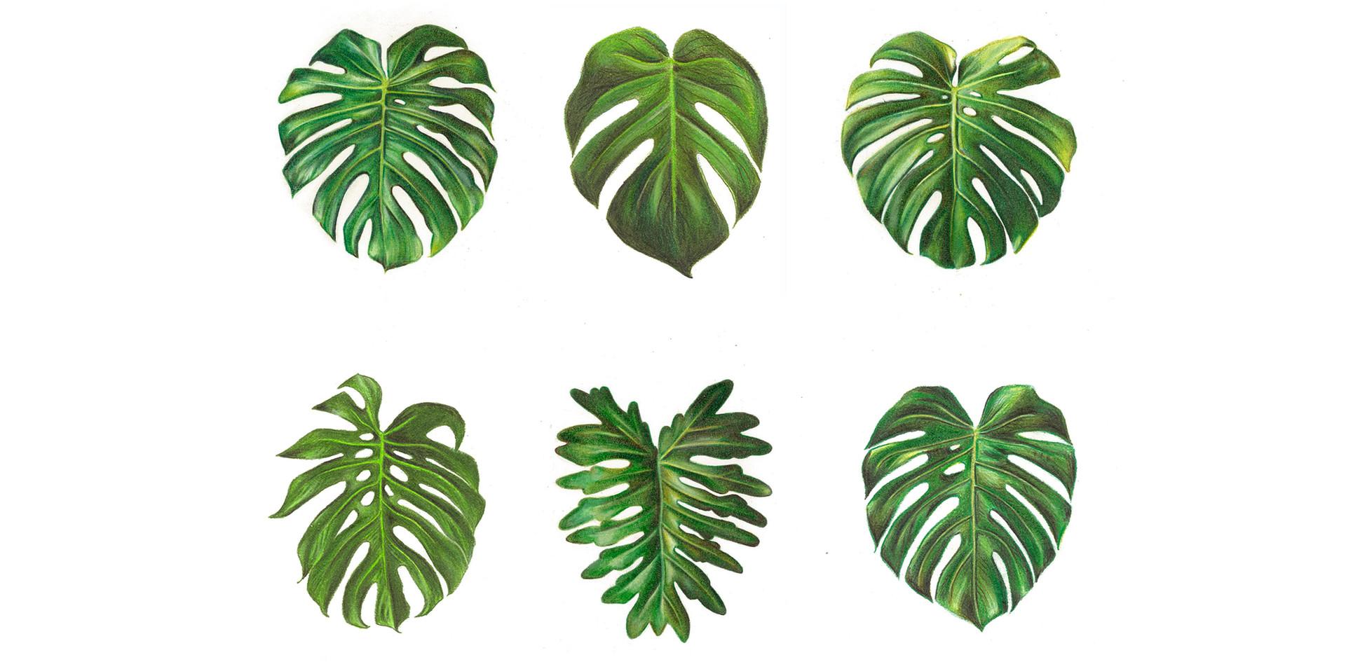 6 leaves.jpg