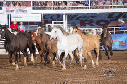 Bucking Horses 2017 1
