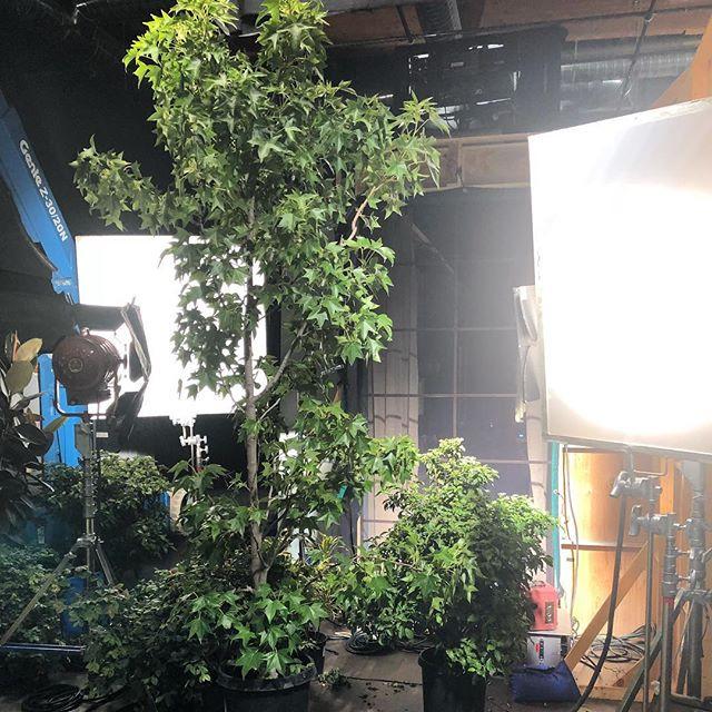 Behind the Set
