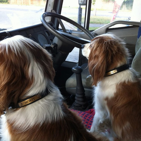 Traveling With Dogs And The Law