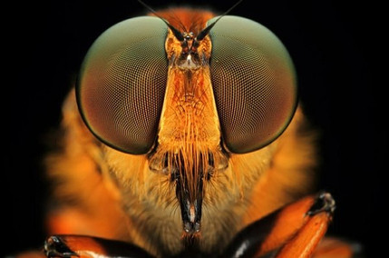 Arch2O-Insects-Macro-Photography-Shikhei