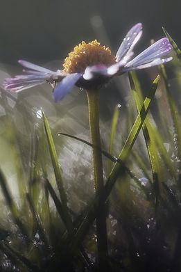flower wix.jpg