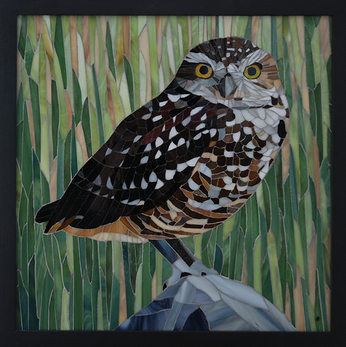 Burrowing Owl - Patti Cannon-Levesque