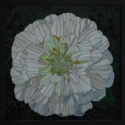 White Zinnia-Patti Cannon-Levesque