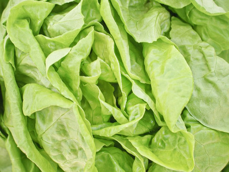 Margaret Krimm Lettuce: A Story of Self-Sufficiency and Love