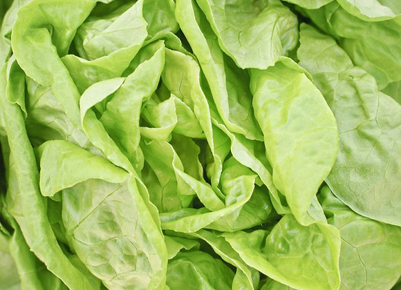 Margaret Krimm Butterhead Lettuce