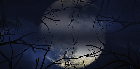Banner-0114.png