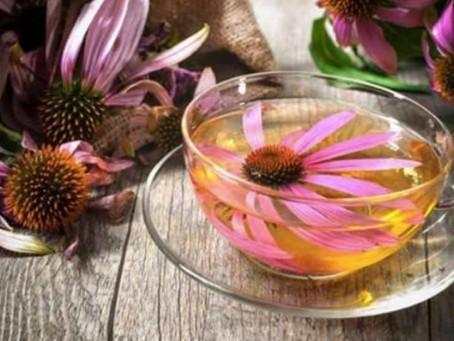 L'échinacea Purpurea : La plante qui stimule le système immunitaire