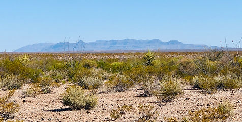 Chaparral fields chinati mountains.jpg