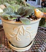 African Violet Dish Garden