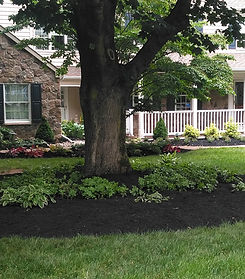 Landscaping, Landscaped front yard, tree, front bed