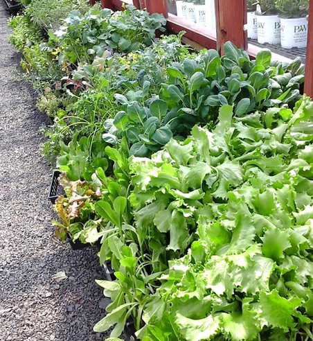 Early Spring Cold Crops