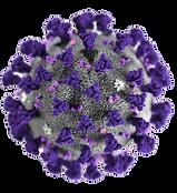 Vitalacy-Coronavirus_edited.png