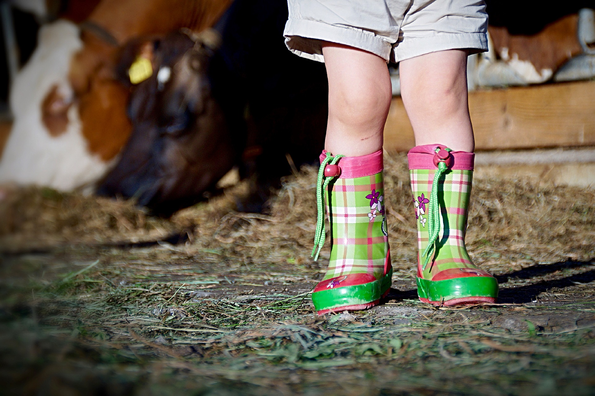 boots-2405036_1920