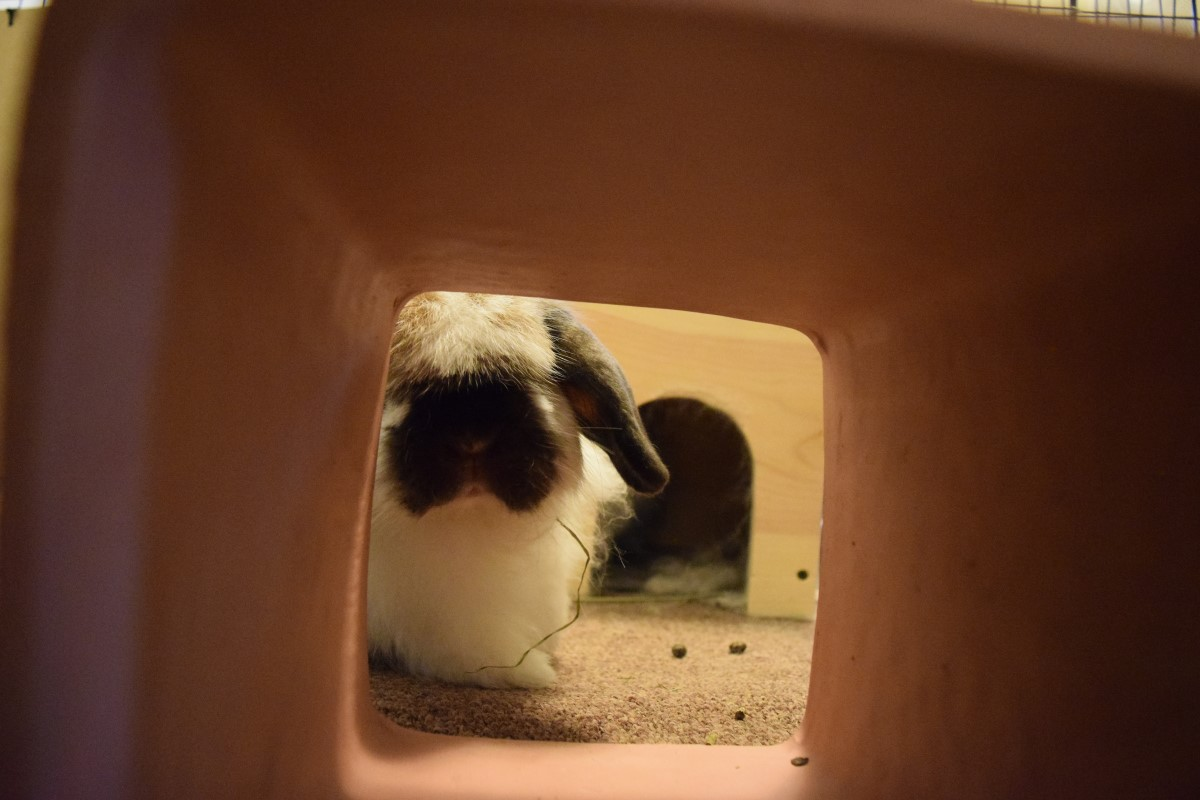 Zephyr Peeking