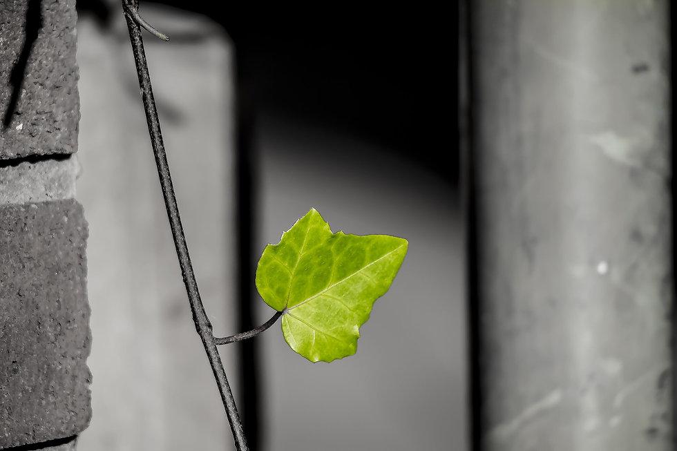 leaf-2922038_1920.jpg