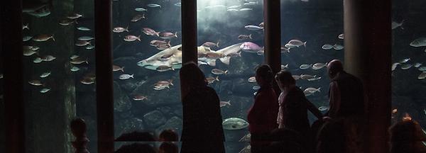 Aquarium Finisterrae.png