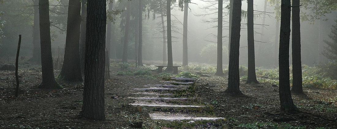 tree walk 3.jpg