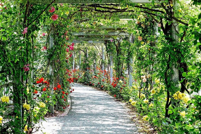 flowers-3112055_1280.jpg