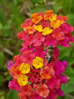 Fleur et Abeille Photo - Christelle Marande