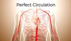 Perfect Circulation