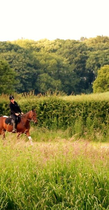 Horse in surrounding fields