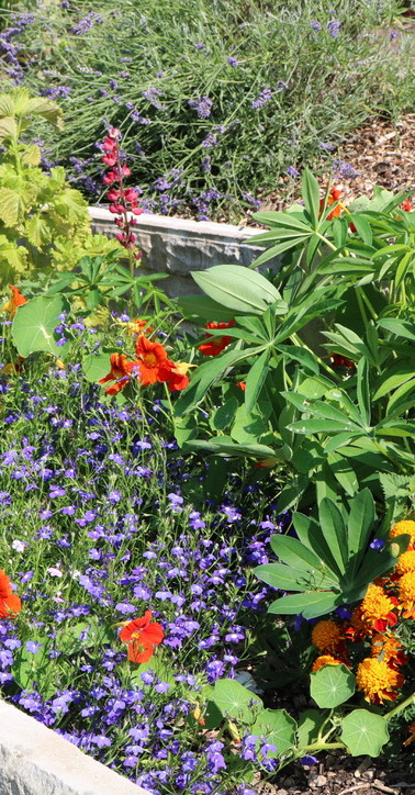 Herb & Flower