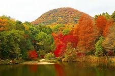 甲山森林公園 紅葉.jpg