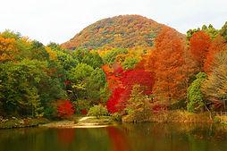 Cycling Tour Autumn Leaves Park Nishinomiya Wheelchair Accessible Travel Amagasaki Nishinomiya Hyogo
