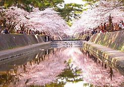 Cycling Tour Syuku River Cherry Blossom Wheelchair Accessible Travel Nishinomiya Amagasaki