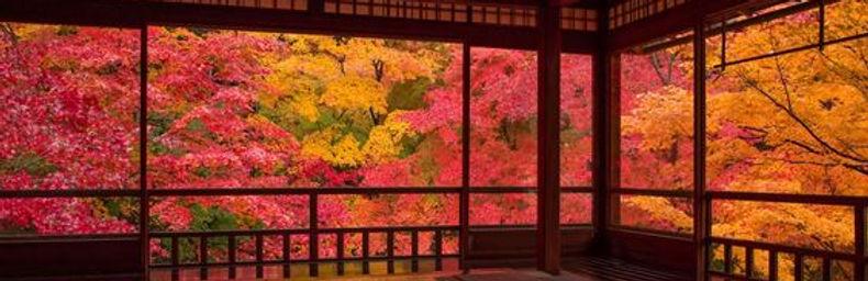 介護旅行 車いす旅行 ヘルスツーリズム 京都観光 紅葉 瑠璃光院