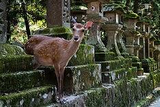Deer Park Nara Wheelchair Accessible Travel Nara