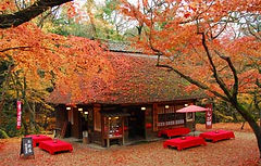 Nara Park Wheelchair Accessible Travel Kyoto