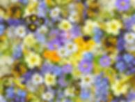 spring-flowers-110671_640.jpg