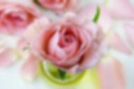 flower-3086563__480.jpg