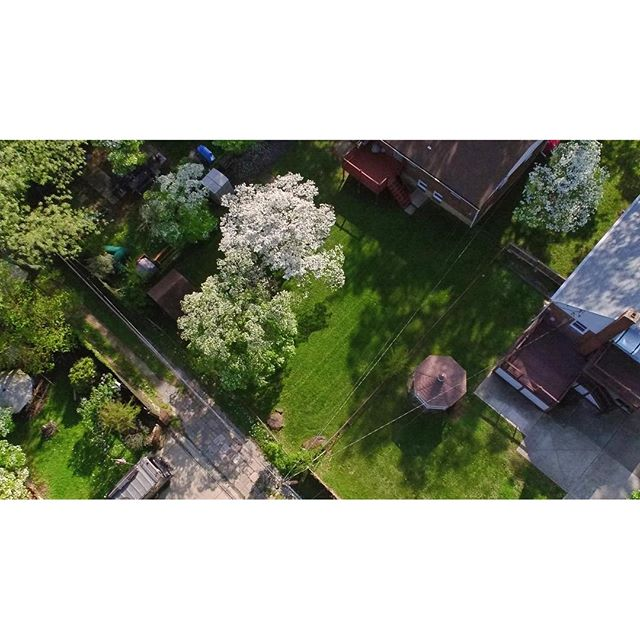 Backyard green grass_._._