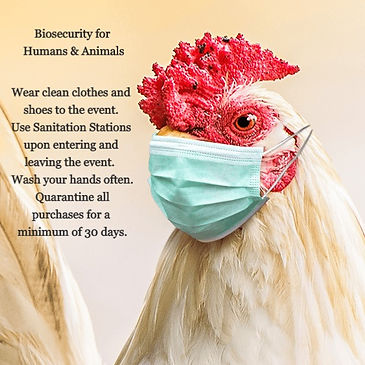 product-webinar-biosecurity-poultry_edit