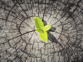 Resiliencia, 7 claves para que tu hijo ¡salga adelante!