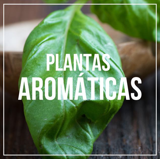 AROMATICAS.png