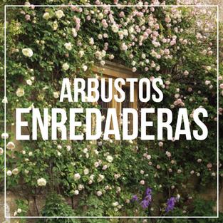 Arbustos Enredaderas