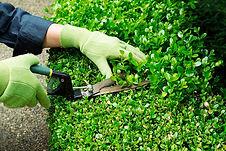 servicio-de-jardineria02.jpg