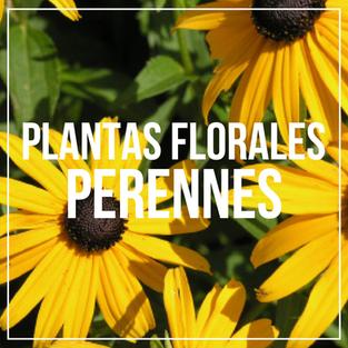 FLORALES.png