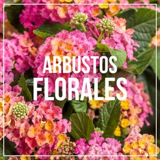 ARBUSTOS-FLORALES.png