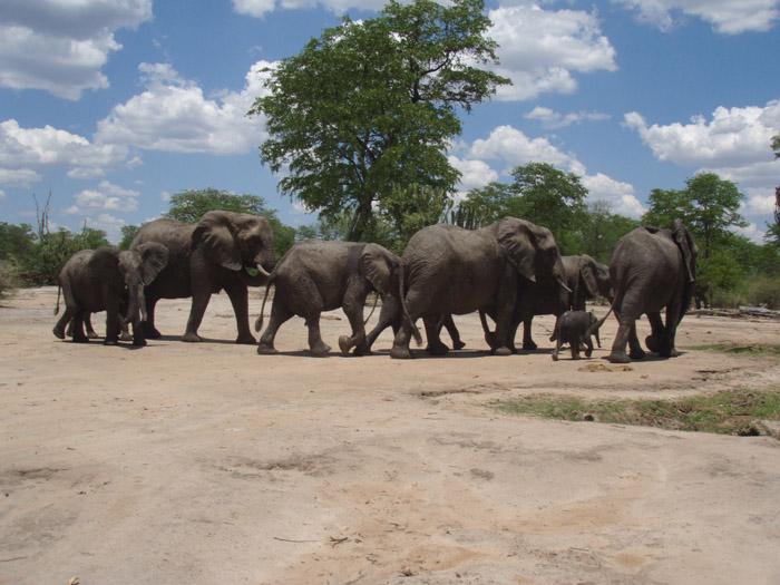 malawi pic19.jpg