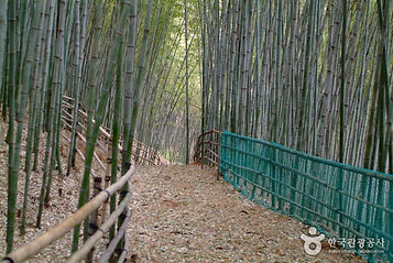 대나무 숲에서 즐기는 캠핑여행_대나무골 테마공원(캠핑1박).jpg